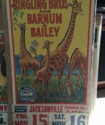 Ringling Bros and Barnum & Bailey Circus Giant Giraffes
